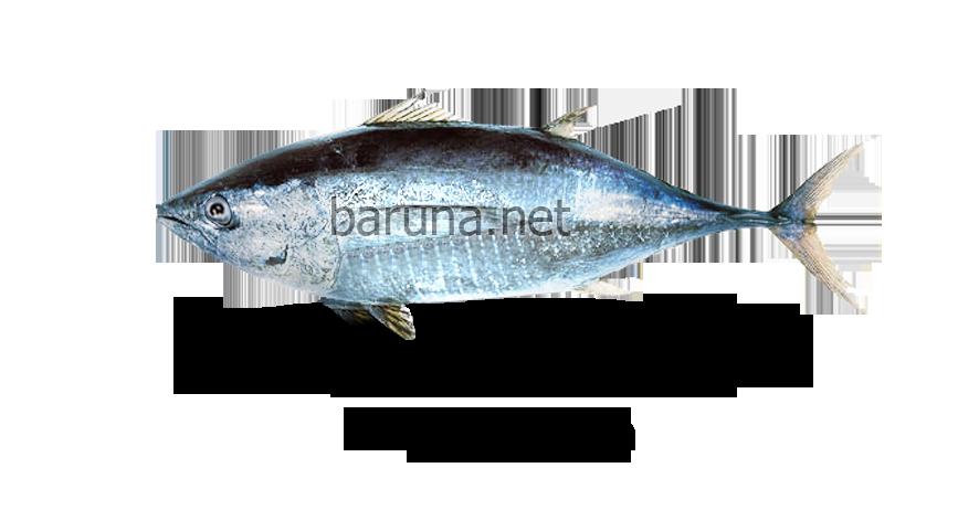 Baby Tuna