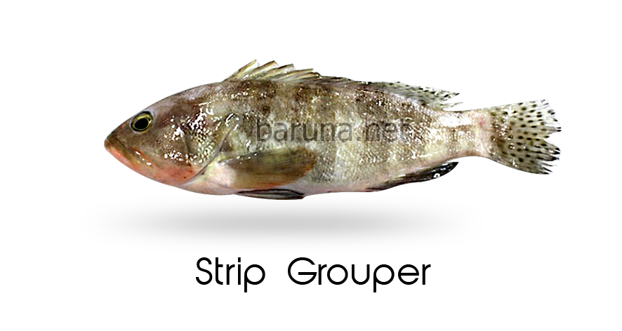 Strip Grouper